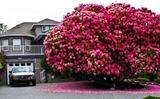 Chiêm ngưỡng 16 loài cây đẹp nhất thế giới