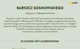 Cây bỏng (barszcz Sosnowskiego)