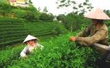 Thái Nguyên: Nơi hội tụ