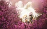 Ảnh chụp thú cưng tuyệt đẹp của nghệ sĩ Ba Lan 19 tuổi