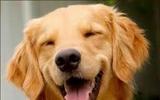 Ba Lan: Thuế sở hữu chó 2019