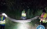 CHÚ Ý! Đài TVN (Ba Lan): Vẫn đang tìm con trăn hổ!