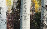 Thư tình khắc trên cây
