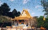 Kỳ lạ chuyện heo 'thành tinh báo oán' ở chùa Dơi