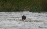 Phụ nữ bơi vượt sông để đến bệnh viện sinh con