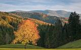 Khám phá khu rừng đen huyền bí ở Đức