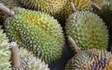 Ăn sầu riêng (durian) và uống rượu có thể gây ra tử vong!