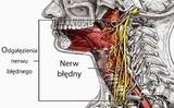 """Dây thần kinh phế vị (tiếng Ba Lan: nerw błędny) – làm thế nào để """"đánh thức"""" nó sao cho có lợi cho sức khỏe?"""