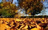 Ba Lan: Mùa thu năm 2018 – khi nào là ngày đầu mùa thu theo lịch và theo năm thiên văn?