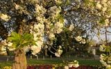 Quán rượu vắng người giữa mùa hoa trắng
